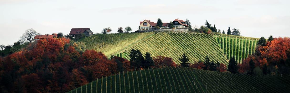 Tement Weingut in steirischer Weinhügellandschaft