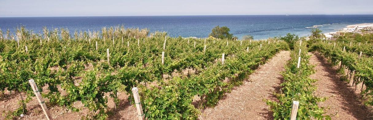 Tenuta Ulisse Wijngoed