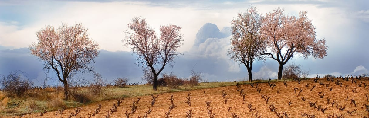 Bodegas y Viñedos Neo Weingärten