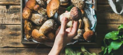 Gourmet-Tipp zu Waldpilzen