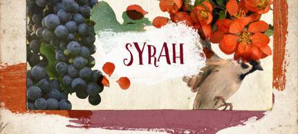 Syrah rules
