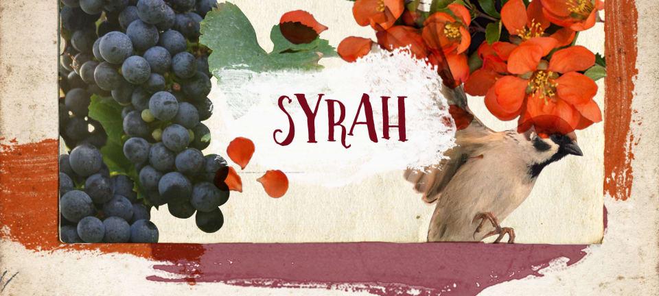 Syrah rules bei Wine in Black