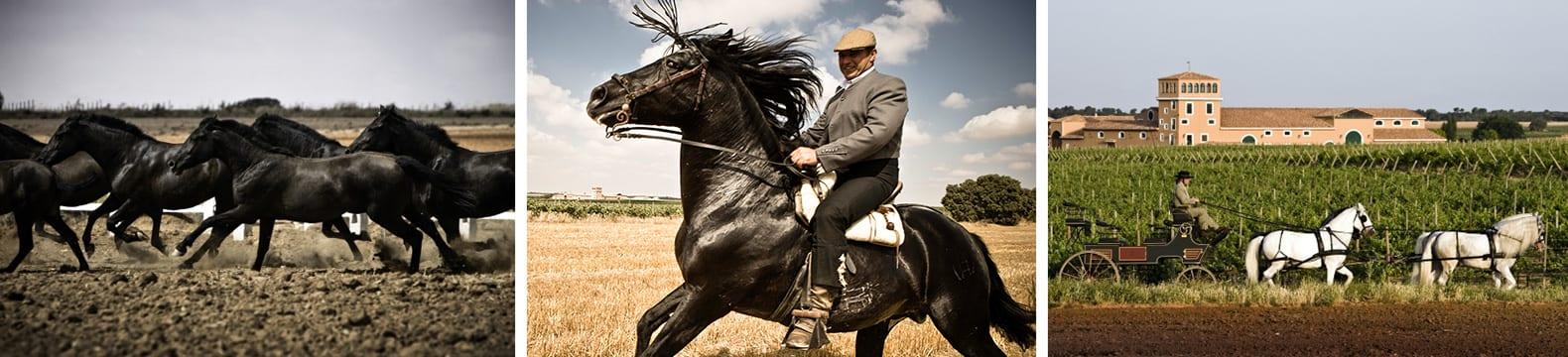Impressionen: Pferde auf der Finca, eine Kutsche vor dem Weingut