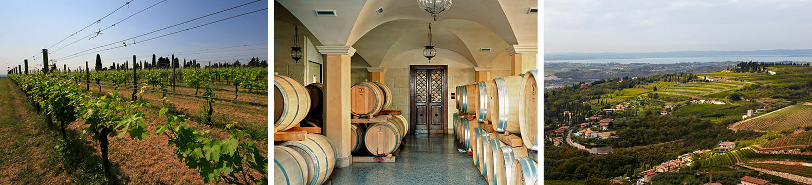 winery allegrini