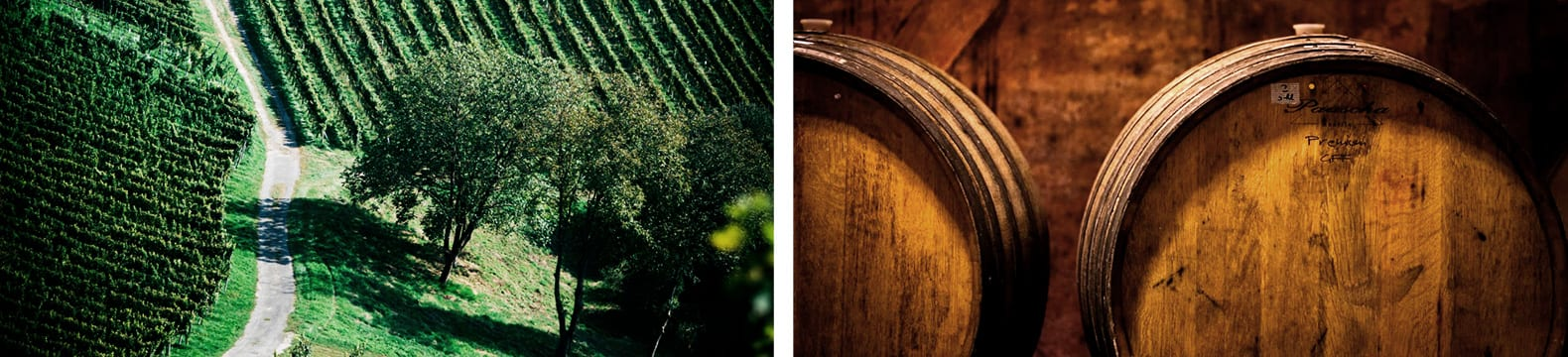 De wijngaard van bovenaf, houten vaten