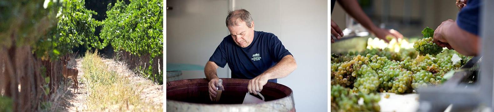 Impressionen vom Weingut Radford Dale