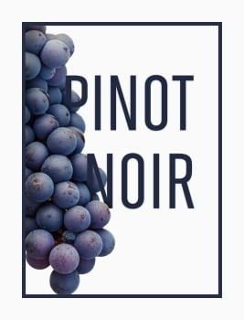 Pinot noir druiven