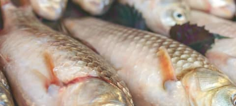 Gourmet-Tipp zu Fisch & Meeresfrüchten