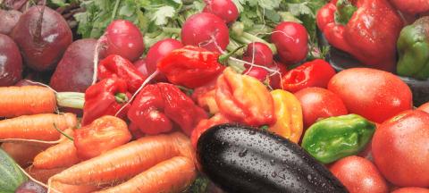Gourmet-Tipp zu vegetarischen Gerichten