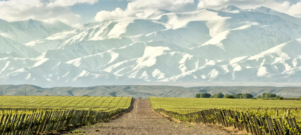 Wein aus Argentine