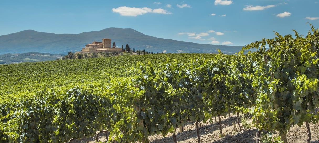 Wein aus Frankrijk
