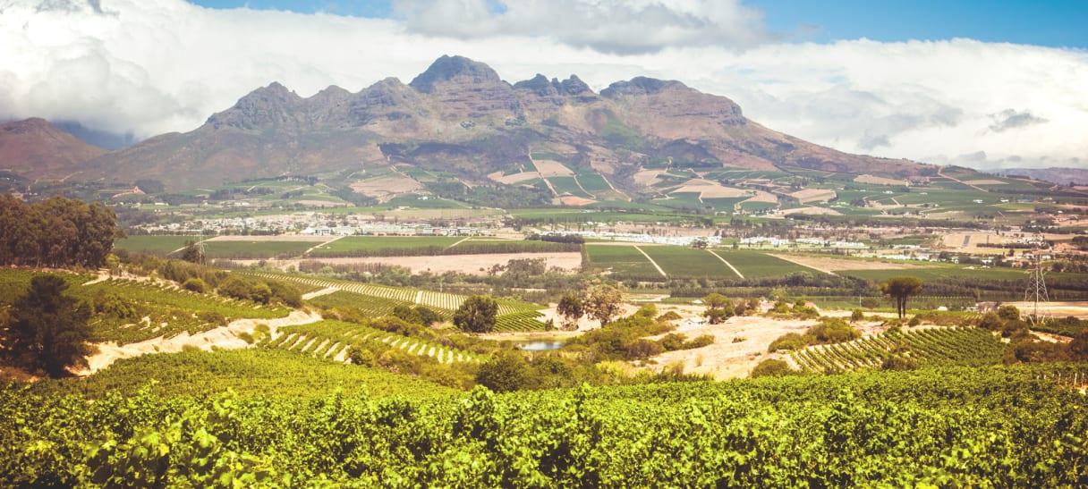 Wein aus Afrique du Sud