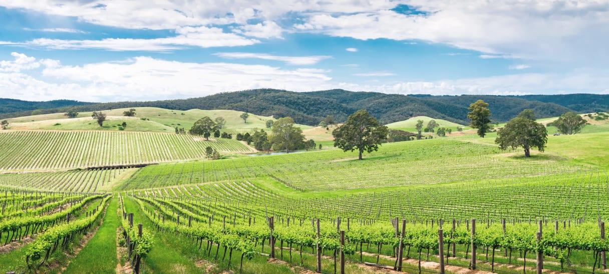 Wein aus Adelaide, Australien