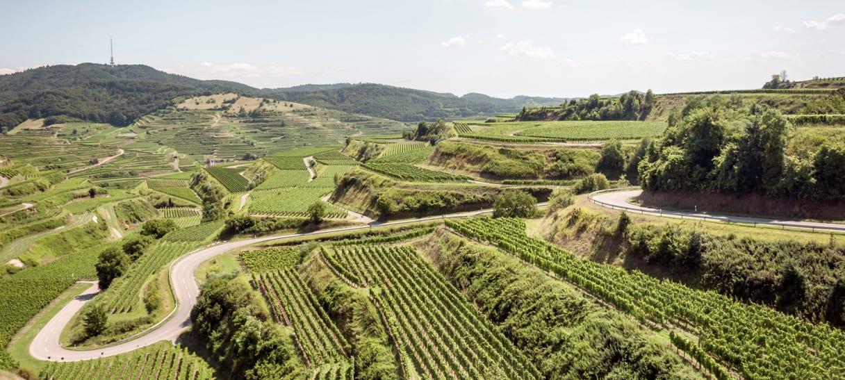 Wein aus Pays de Bade, Allemagne