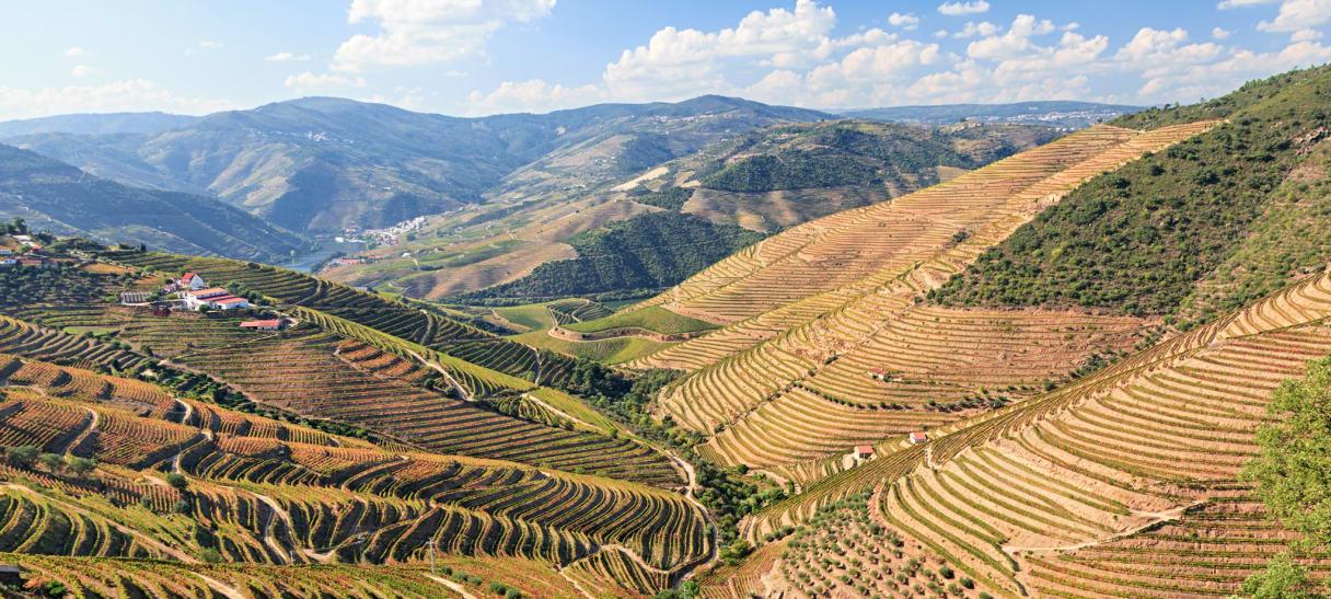 Wein aus Bairrada, Portugal