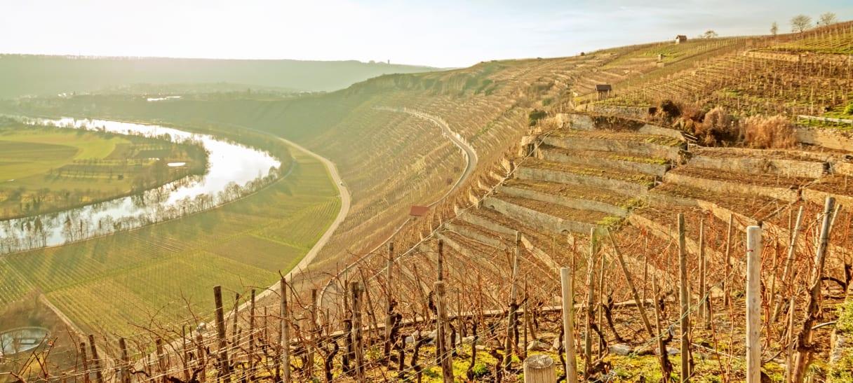 Wein aus Barossa Valley, Australië