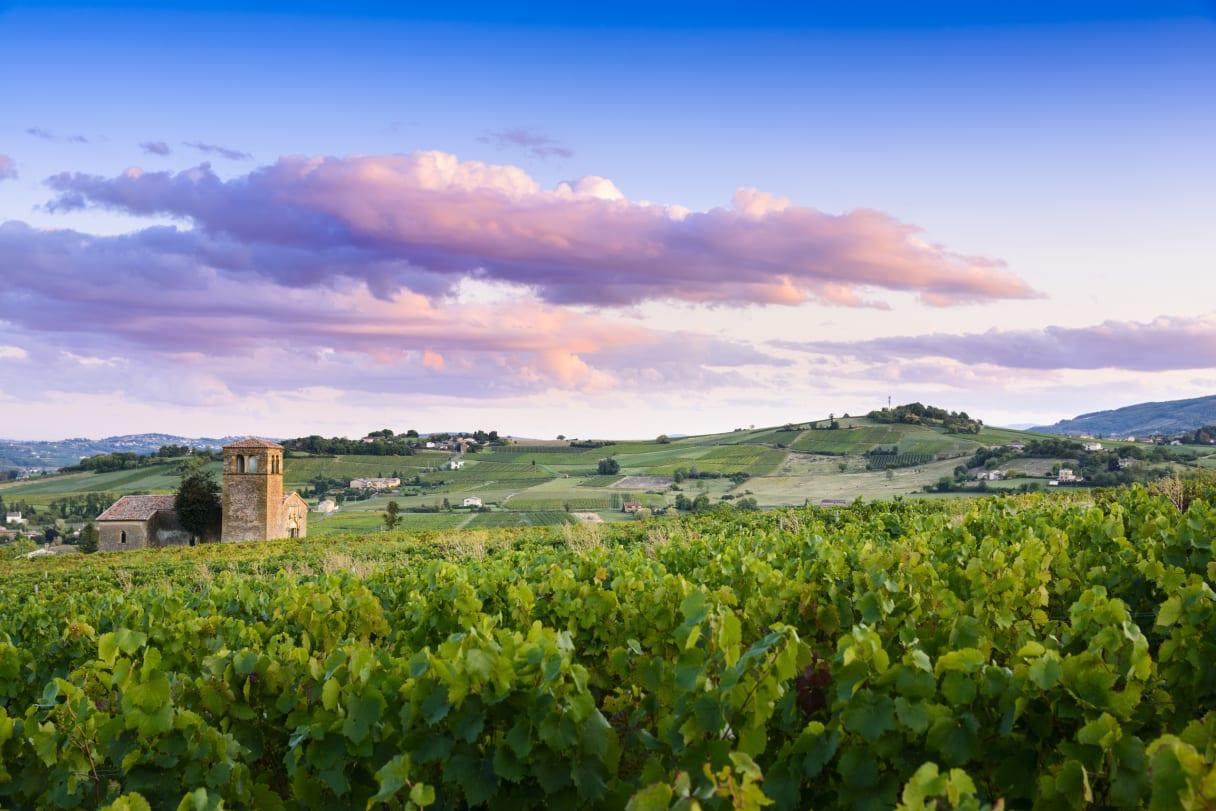 Wein aus Beaujolais, Frankreich