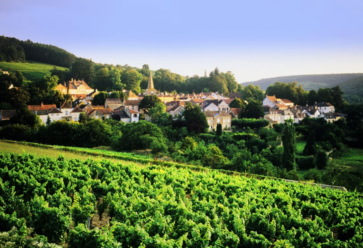 Wein aus Bourgondië, Frankrijk