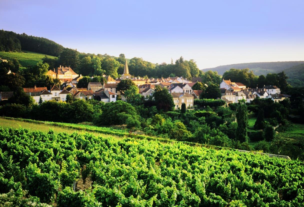 Wein aus Burgund, Frankreich