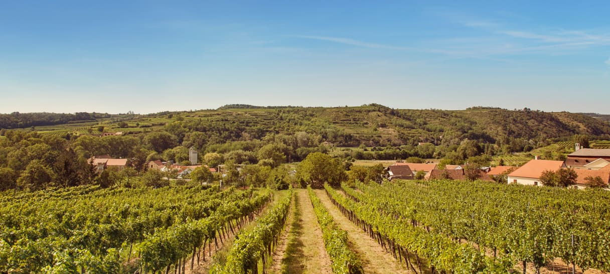 Wein aus Kamptal, Österreich