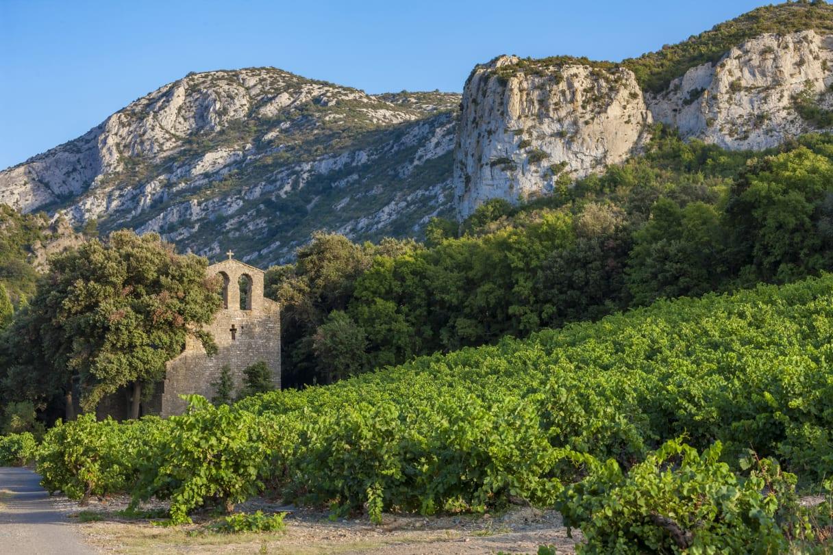 Wein aus Languedoc, Frankreich