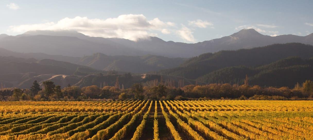 Wein aus Marlborough, Neuseeland