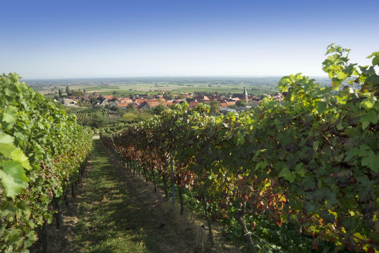 Wein aus Pfalz, Deutschland