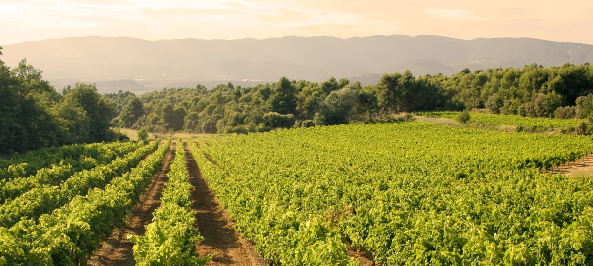 Wein aus Provence, Frankreich