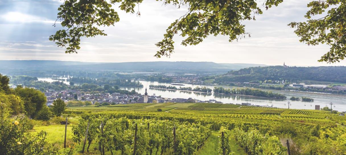 Wein aus Rheingau, Deutschland