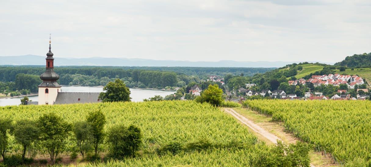 Wein aus Hesse rhénane, Allemagne