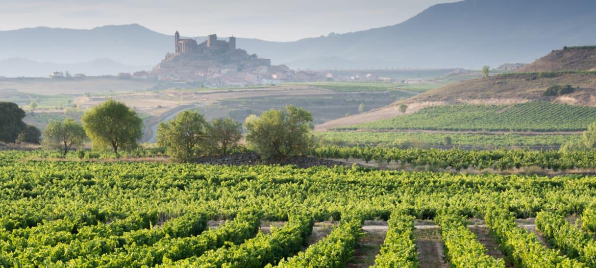 Wein aus Ribera del Duero, Spanje