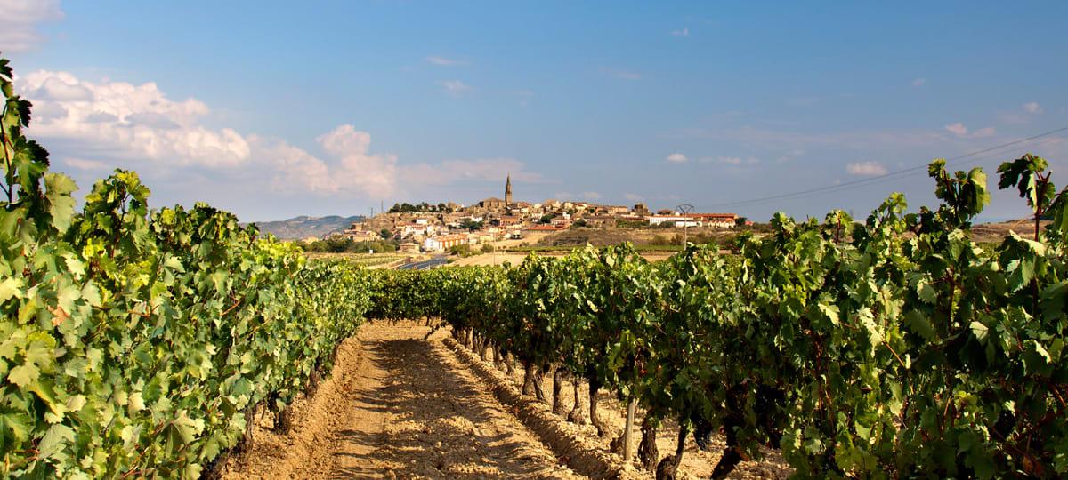 Wein aus Rioja, Spanien