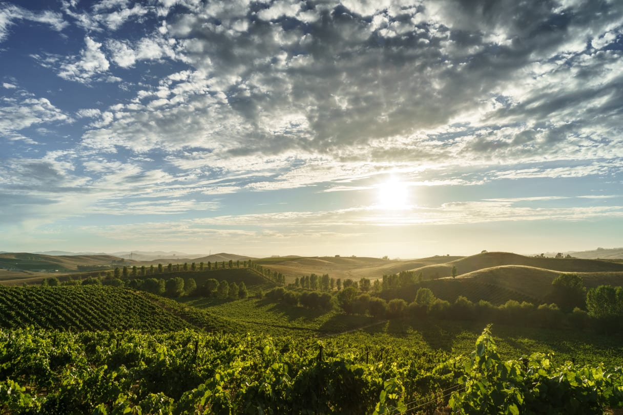 Wein aus Sonoma Coast, USA