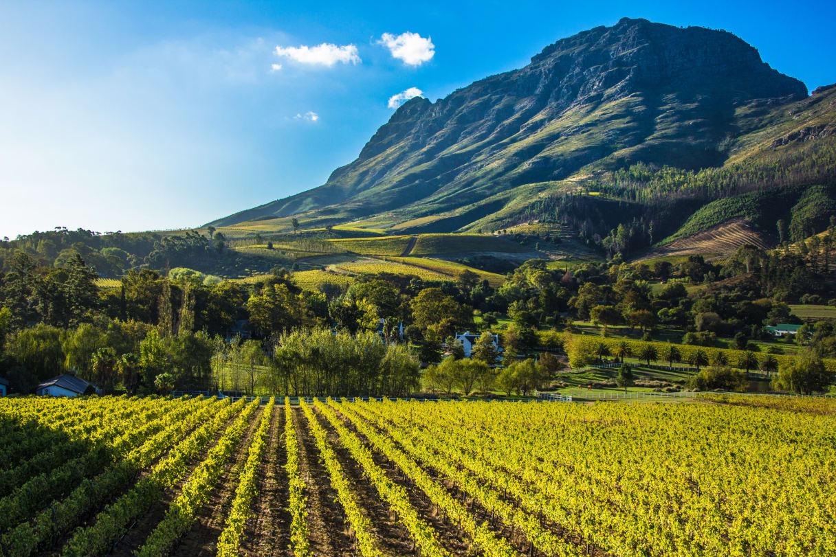 Wein aus Stellenbosch, Zuid-Afrika