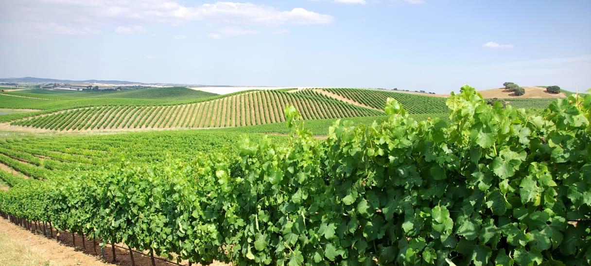 Wein aus Vinho Verde, Portugal