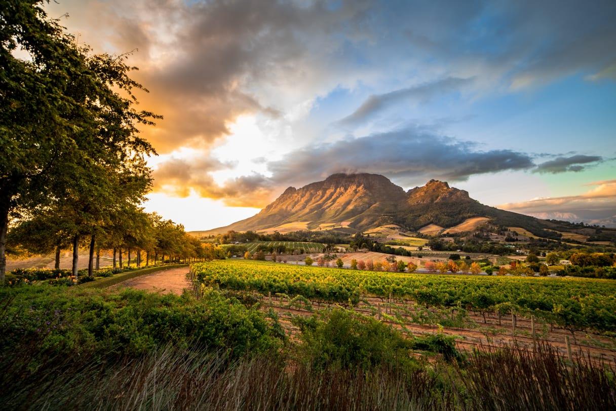 Wein aus Western Cape, Südafrika