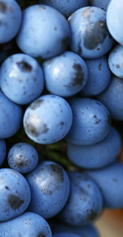Pinot Noir, wein aus Südafrika
