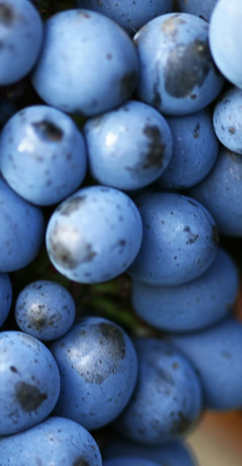 Pinot Noir, wein aus USA
