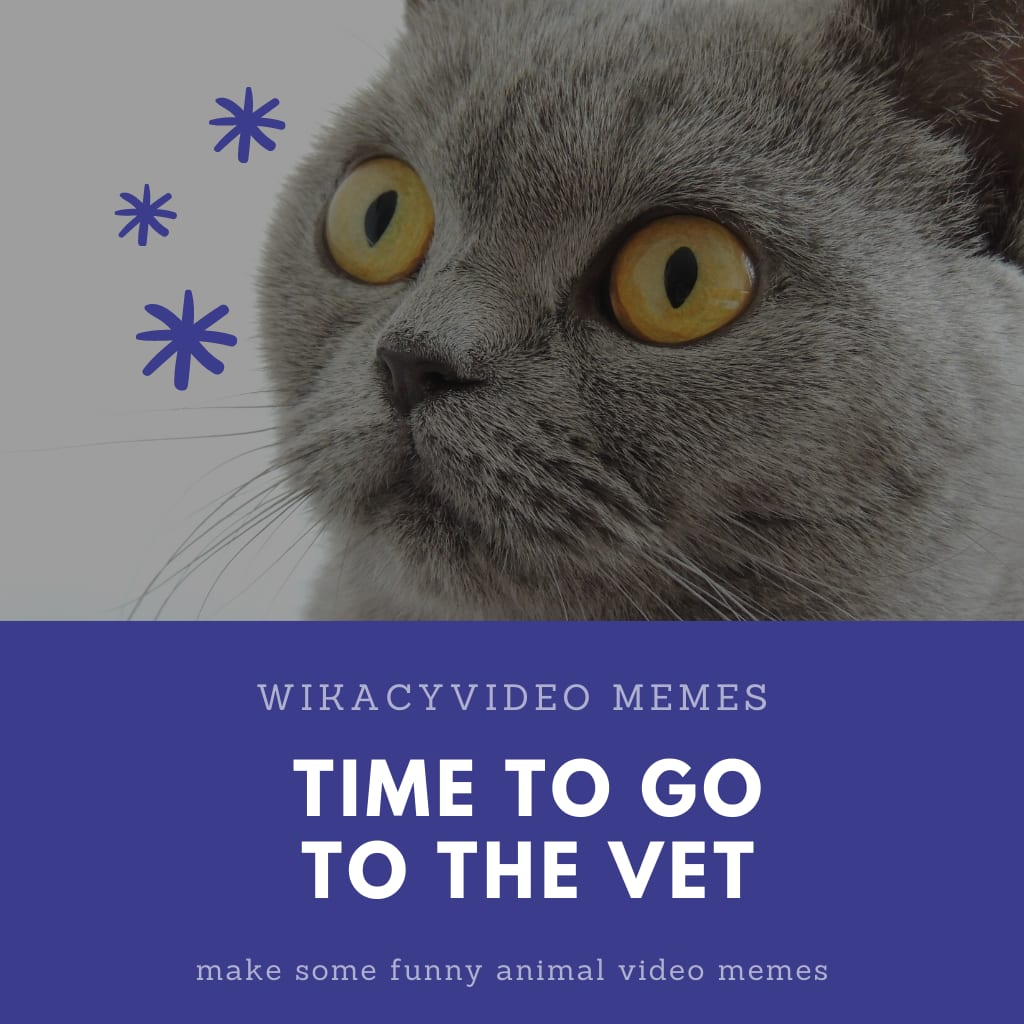 Time to Go to the Vet