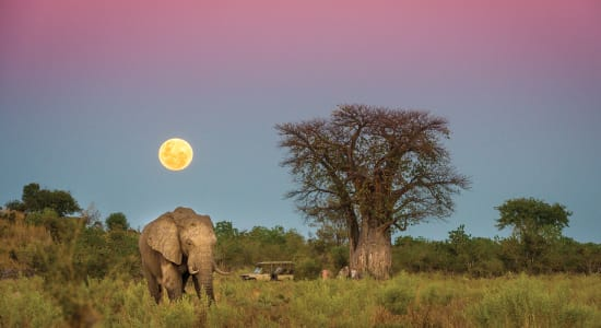 botswana elephant safari moonrise evening