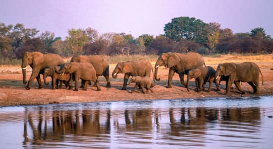 zimbabwe africa safari hwange elephant herd waterhole