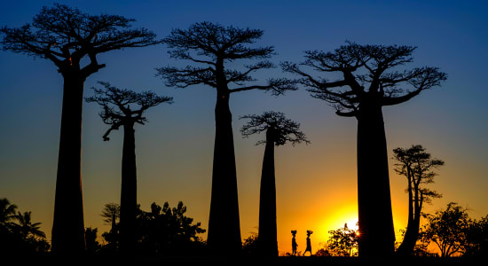 madagascar sunset baobab