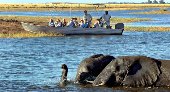elephant botswana boat game view