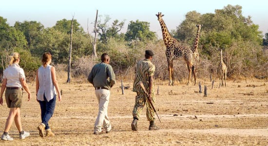 1 slide zambia luangwa bush walk giraffes pano