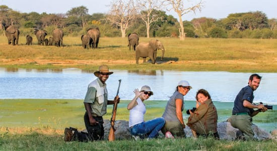 zimbabwe green season walking safari clients watching elephants camelthorn