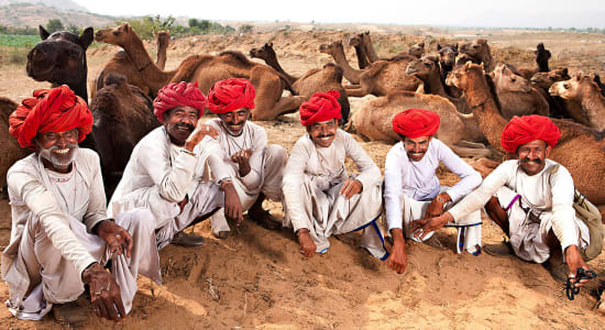 1 slide india rajasthan camels pano