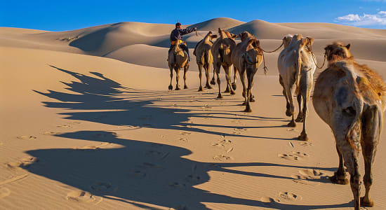 mongolia camels shadow dunes