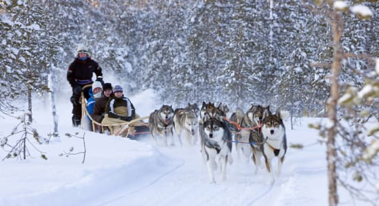 finland lapland sled dogs pulling sleigh