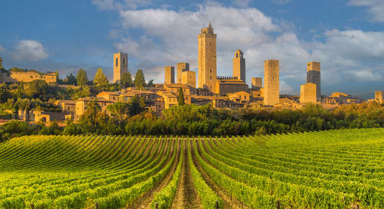 san gimignano vineyard