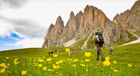 dolomites italy hikers puez odle flowers